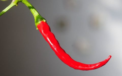 chili-peppers_1280-1024x682-1
